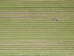 sensefly UAV
